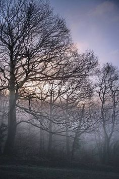 """Silent morning whispers"" by Maria Ismanah Schulze-Vorberg, Königswinter // trees in winter with early morning mist (fog) // Imagekind.com -- Buy stunning, museum-quality fine art prints, framed prints, and canvas prints directly from independent working artists and photographers."
