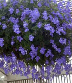 1000 Images About Hanging Baskets On Pinterest Hanging