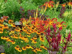 Helenium 'Helbro' (Mardi Gras) with Celosia spicata 'Mega Punk' and Hemerocallis 'Nona's Garnet Spider'; Nancy J. Ondra at Hayefield