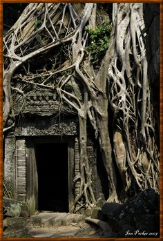 doorways | Doorway and roots : Ta Prohm Temple : Angkor, Cambodia