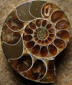 artemisdreaming:  Ammonite Structure…(Explored) From Majuga, Madagascar Sea Moon