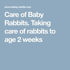 Care of Baby Rabbits. Taking care of rabbits to age 2 weeks