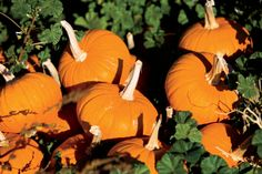 Raise Your Own Pumpkins: How to Save Seeds