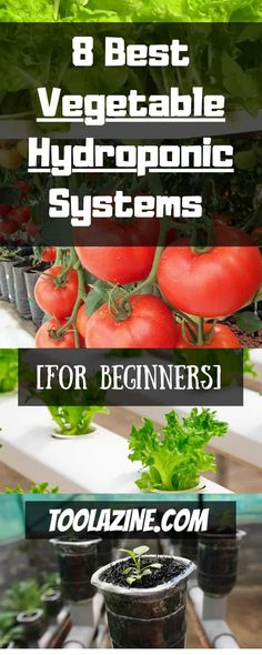 8 Best Vegetable Hydroponic Systems For Beginners. How to build easy DIY hydroponics vegetable gardening systems for indoor or outdoor. Ebb and flow hydro and more. Hydroponic Growing, Hydroponic Gardening, Container Gardening, Organic Gardening, Vegetable Gardening, Aquaponics Diy, Indoor Hydroponics, Gardening For Beginners, Gardening Tips