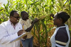 Kenya: organic farming is productive and resource-conserving
