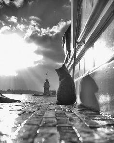 Čierna mačička prdel