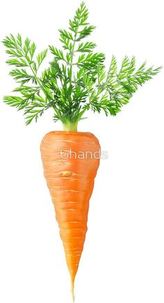 Carrot with big leaves : with big leaves. Die-cut vinyl stickers with beautiful fruits and vegetables for laptops, journals, scrapbooking, kids activities and DIY projects Fruit And Veg, Fruits And Vegetables, Beautiful Fruits, Beautiful Flowers, How To Plant Carrots, Health Benefits Of Carrots, Photo Fruit, Canned Carrots, Green Juices