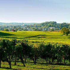 Vins et cépages de l'Anjou / Wines and grape varieties of Anjou Loire Valley