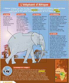 Fiche exposés : L'éléphant d'Afrique                                                                                                                                                     Plus