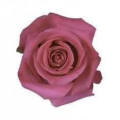 Topaz Hot Pink Fuchsia Roses Wholesale Wedding Flowers  #love #flowers #romance #decor #wedding #decorations #bulkroses #bride #party #bouquets