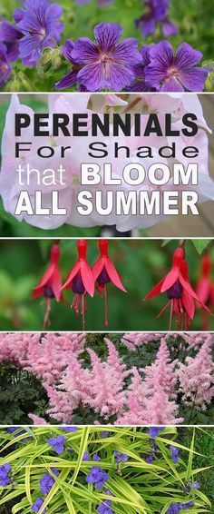 Gardening Tips Here are our top picks for shade plants and choosing perennials for shade that bloom all summer long! - Here are our top picks for shade plants and choosing perennials for shade that bloom all summer long! Garden Landscaping, Garden Shrubs, Garden Planning, Flowers Perennials, Shade Plants, Bloom, Perennials, Plants, Shade Flowers