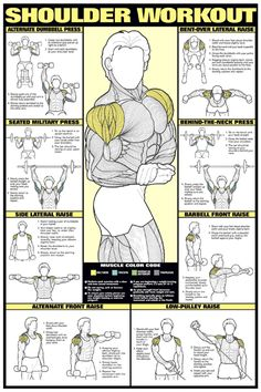 SHOULDER WORKOUT WALL CHART Professional Strength Training Fitness Gym Poster in | eBay