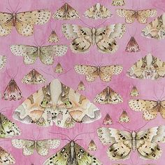 Wallpaper Direct offers a range of Designers Guild wallpapers from the Jardin des Plantes Wallpaper Collection Designers Guild Wallpaper, Designer Wallpaper, Blue Books, Manish, Love Wallpaper, Poodles, Floral Bouquets, Best Games, Moth