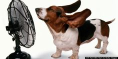 "Ruff! Ruff! Texas sweltering *Heat in  the midst of ""The Dog days of Summer !""  Hot Question -  How did they do without It?   Was not that long ago, either, that people used Attic Fans in the Homes  (Fifty Years ago!) 10 Ways To Keep Your Home Cool.. Without Touching The Air Conditioner"