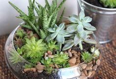суккуленты и кактусы мини-садик 31