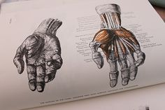Anatomy book of hands - muscular view