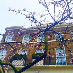 The prettiest city in spring. London Calling, Looking Up, Cherry Blossom, Behind The Scenes, Style Fashion, Mansions, House Styles, City, Spring
