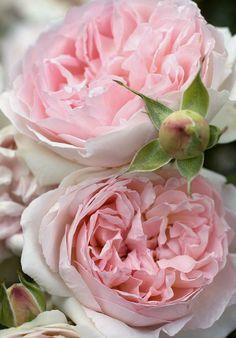 Chi semina Cortesia miete Amicizia, chi pianta Gentilezza raccoglie Amore - Proverbio -