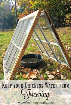 Chickens need clean fresh water all year round, but even without electricity, it's easy to keep their water from freezing in the winter.