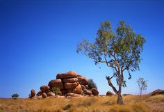 Old Man Rock ~ Old Man Rock He sits there watching Spinifex and gum trees Emu and the wallabies Old Man Rock He's steady-on I sit upon him Wondering At all that is And ever was And what it means And what becomes . Emu, Old Men, Trees, Rock, Nature, Stone, Naturaleza, Rock Music, The Rock