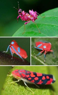 pink insects