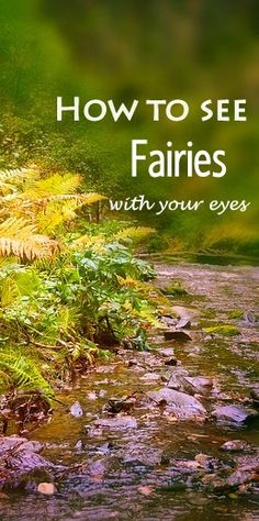 How and where to see fairies - demystified. Easy to understand, clear explanations and descriptions on where to find a fairy, and how to see them - what exactly to do, in what location, and what time of day.