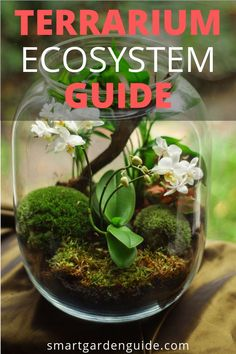 How does a terrarium work? Learn more about terrariums, terrarium ideas, the differences between closed terrariums and open terrariums. What plants are good for terrariums, DIY terrarium. Learn more at smartgardenguide.com