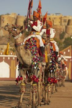 Jaisalmer, Rajasthan, India - February 20, 2008: Camels And Riders.. Royalty Free Stock Photo, Pictures, Images And Stock Photography. Image 8150745.