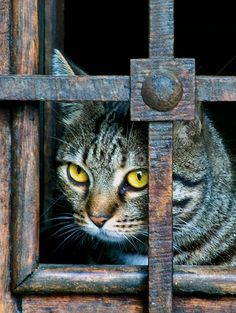 """""""Some animals are secretive, some are shy.  A cat is private."""" --Leonard Michaels"""
