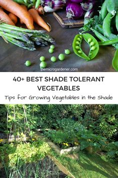 Discover the best shade tolerant vegetables to grow in limited sunlight; pros and cons of a shady garden; how many hours of sun you need + 8 tips for growing vegetables in the shade. Organic Gardening, Gardening Tips, Flower Gardening, Vegetable Garden Design, Vegetable Gardening, Garden Signs, Large Plants, Growing Vegetables, Growing Tomatoes