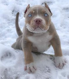 Omg he is to cute pit bulls питбуль, животные, картинки Cute Baby Animals, Animals And Pets, Farm Animals, Beautiful Dogs, Animals Beautiful, Pitbull Dog Puppy, Bully Dog, Cute Puppies, Dogs And Puppies