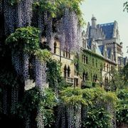 How to Transplant an Old Wisteria & Grapevine | eHow