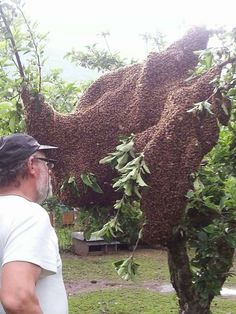 Giant multi box size - SWARM Better get a couple extra queens! Beautiful Bugs, Amazing Nature, Hives And Honey, Honey Bees, Bamboo Landscape, Bee Swarm, Bee House, Bees And Wasps, Bee Sting