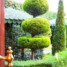 kopshti-i-gjelber-ne-Hotel-Union-ne-Kamez,-Tirane,-Shqiperi  http://hotelunion.al/garden-2/
