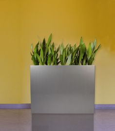 Linbar barrier planter in polished metallic silver, planted with Sansevierias