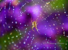 This morning I took some beautiful photos of dew‐covered spider webs.It's was jeweled with stars.