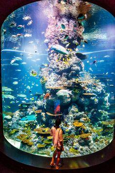 Sentosa SEA Aquarium - 7 Things You Can't Miss at Sentosa Island Sentosa Island Singapore, Singapore Map, Singapore Photos, Croatia Travel, Thailand Travel, Italy Travel, Bangkok Thailand, Hawaii Travel, Aquarium