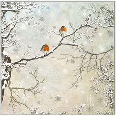 Waterlyn Quality Cards - Two Robins (BAWC15), $41.70 (http://waterlyn.com.au/two-robins-bawc15/)