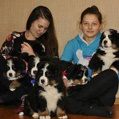 Puppyyyyyyyyyyys... #dogs #smalldogs #goodmood #happy #fine #goodtime #colorsphoto #cool #instagood #instadaily #black #white #love #mylove #puppy #kind #lovely #spring #springtime #home #photo #gallery #superday #haus #nikolaev #ukraine #likes #likeforlike #likemeliketo #like4like  Photo By: _sea_air  http://bit.ly/teacupdogshq