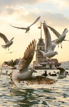 The Bird Tower - Uskudar - Istanbul - by Yaşar Koç
