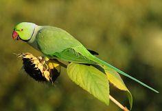 A farm that provides natural produce in the UAE, parrotfriendly - City Parrots -