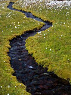 Small stream through cotton grass by Peter Nijenhuis, via Flickr