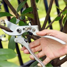 28.40$  Buy now - http://alihq5.shopchina.info/go.php?t=32699972974 - 2016 New High-grade scissors gargen tree branch pruning Tools with lock catch home gardening common shears tools free shipping 28.40$ #shopstyle