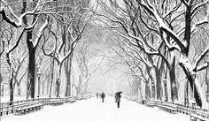 Disso Voce Sabia?: Mudanças climáticas: Forte e letal tempestade de gelo e neve atinge o sudeste dos EUA