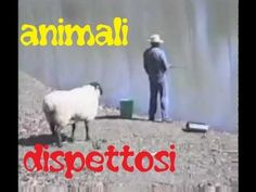 Animali Dispettosi