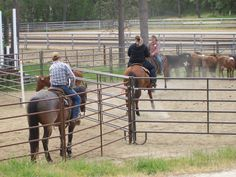 Ranch Sorting Clinic at Performance Horse Arena in Grants Pass, Oregon