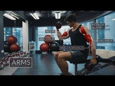 """""""Exercise Anatomy: Arms Workout"""" by Pietro Boselli - 16 December 2016 Best Bicep Workout, Gym Workout Tips, Biceps Workout, Workouts, Cardio, Reverse Curls, Pietro Boselli, Biceps And Triceps, Different Exercises"""
