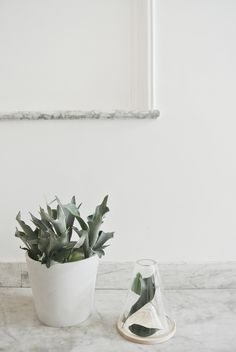 interplay between green foliage + white marble