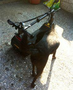 Inspektion durch Henry, den Hund. UCARVER Carbon Edition vor der Ausfahrt in Graz!