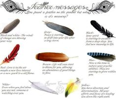 Feather meanings More